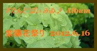 アルバム用 紫陽花祭り 2012.6.16
