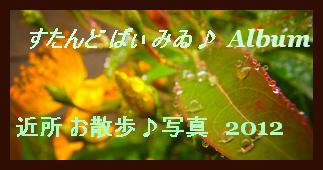 アルバム用 近所 お散歩 写真 2012.6
