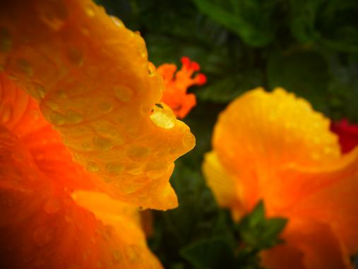 2012.7.10分 写真 日曜雨お散歩 5