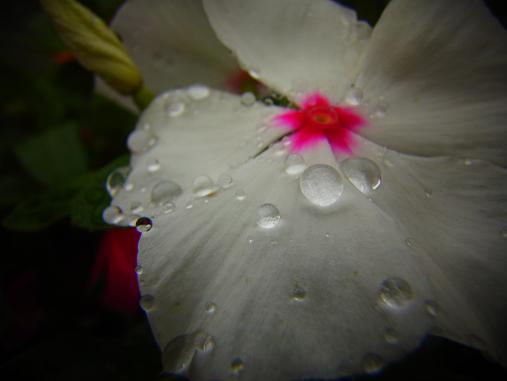 2012.7.10分 写真 日曜雨お散歩 1