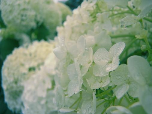2012.7.12分 お菓子+写真 4
