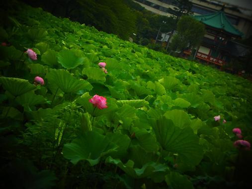 2012.7.22分 蓮速報 3
