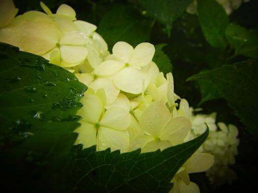 2012.8.18分 写真 画像穴埋めw; 2