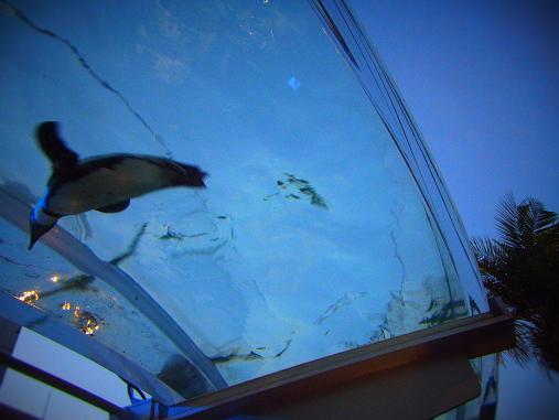 2012.9.1分 誕生日の水族館の写真 12