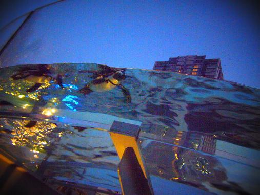 2012.9.1分 誕生日の水族館の写真 11