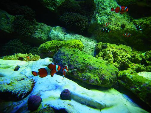2012.9.1分 誕生日の水族館の写真 10