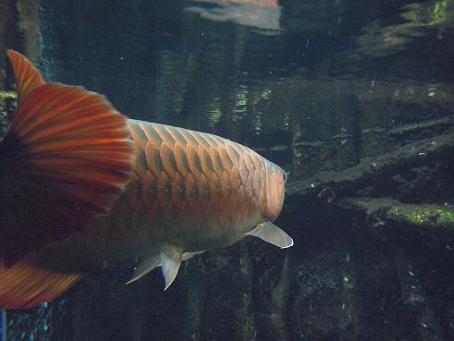 2012.9.1分 誕生日の水族館の写真 8
