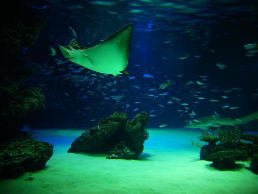 2012.9.1分 誕生日の水族館の写真 7