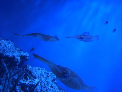 2012.9.1分 誕生日の水族館の写真 4