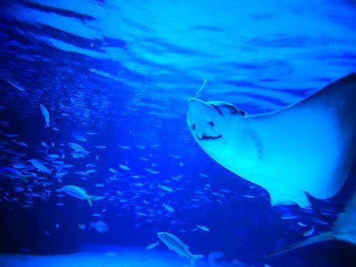 2012.9.1分 誕生日の水族館の写真 1
