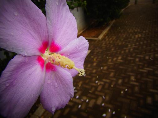 2012.9.11分 お散歩写真、雨上がり~ 5