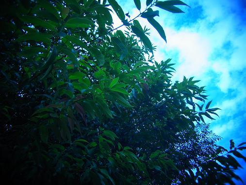 2012.9.11分 お散歩写真、雨上がり~ 4