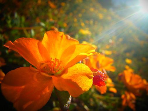 2012.10.19 その他の気に入った花写真~ 9
