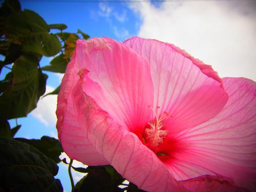 2012.10.19 その他の気に入った花写真~ 8