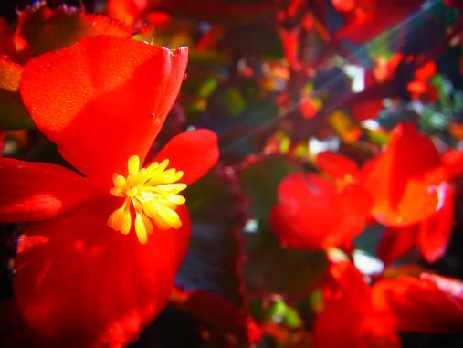 2012.10.19 その他の気に入った花写真~ 7