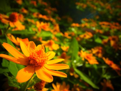 2012.10.19 その他の気に入った花写真~ 5