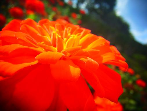 2012.10.19 その他の気に入った花写真~ 1