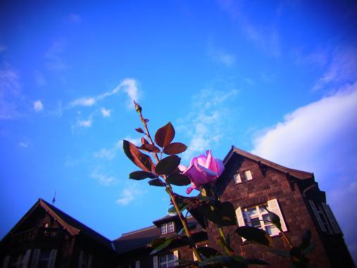2012.10.26 夕暮れ秋のバラ園 8