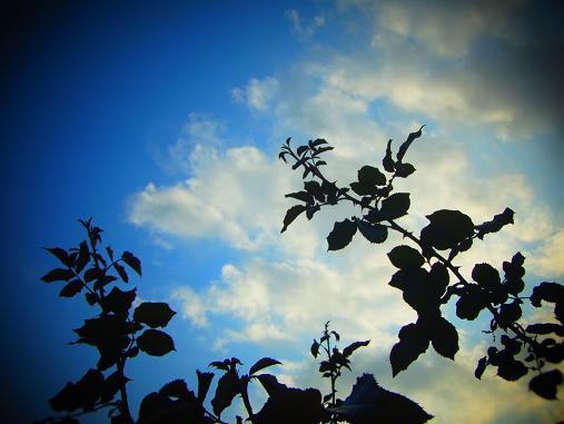 2012.10.26 夕暮れ秋のバラ園 5
