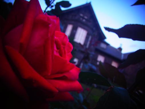 2012.10.26 夕暮れ秋のバラ園 6