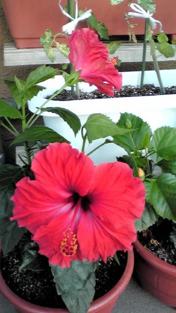 2012-0910-hana_convert_20120911103949.jpg