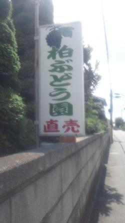 ぶどう園2