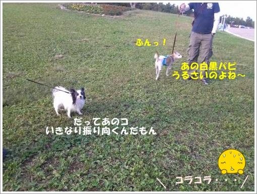 001_convert_20121011115907.jpg