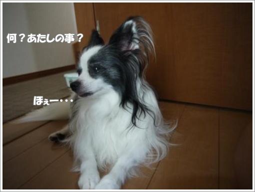 002_convert_20120920121341.jpg
