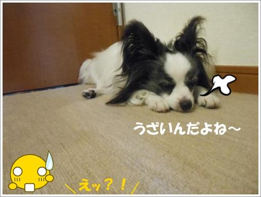 003_convert_20120725125628.jpg