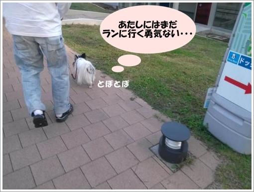 003_convert_20121011120054.jpg
