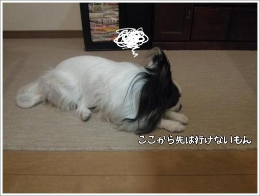 003_convert_20121220123055.jpg