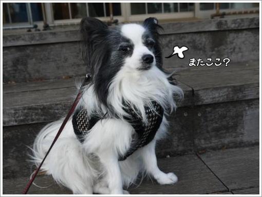 004_convert_20121211122335.jpg