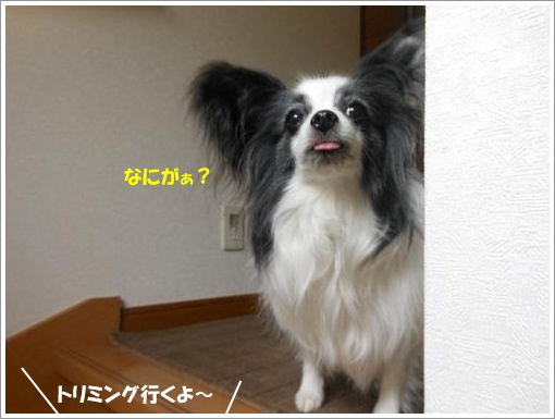 005_convert_20120702112647.jpg