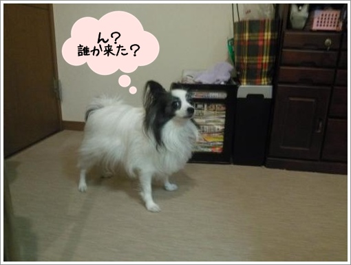 005_convert_20121220123234.jpg
