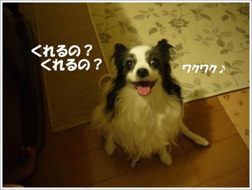 007_convert_20120910121855.jpg