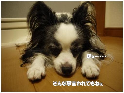 009_convert_20120920122032.jpg