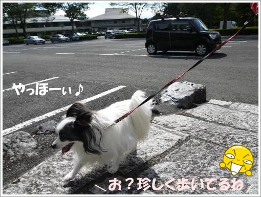 009_convert_20121001093649.jpg