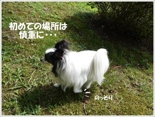 011_convert_20121001094230.jpg