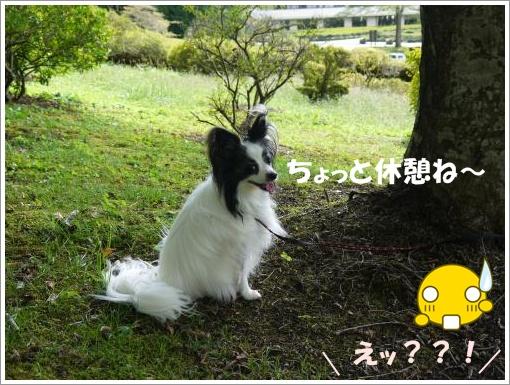 012_convert_20121001094416.jpg