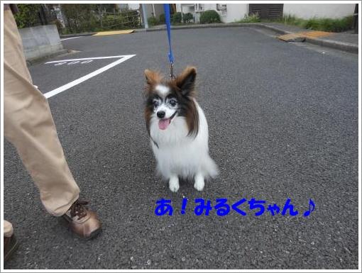 014_convert_20120730121000.jpg