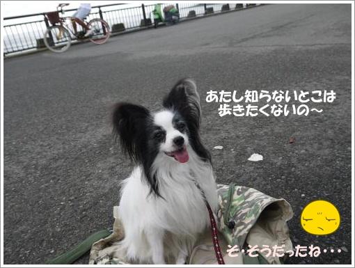 016_convert_20120918095154.jpg