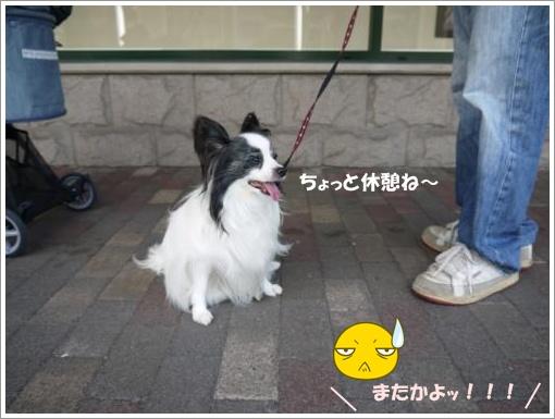 016_convert_20121001121011.jpg