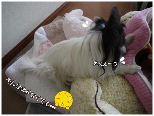 017_convert_20121119121459.jpg