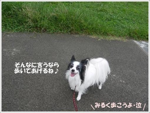 018_convert_20120918095723.jpg