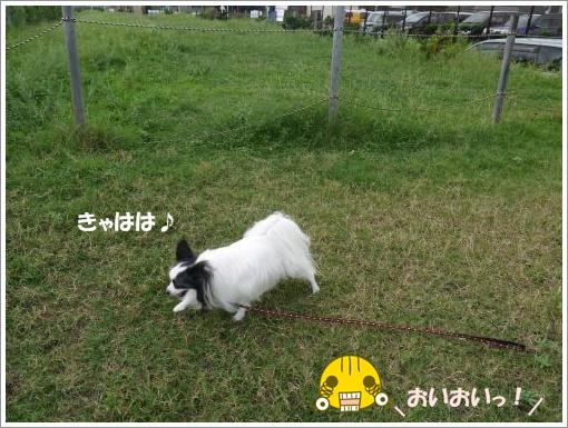 020_convert_20120918100117.jpg