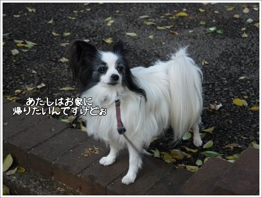 020_convert_20121127122945.jpg