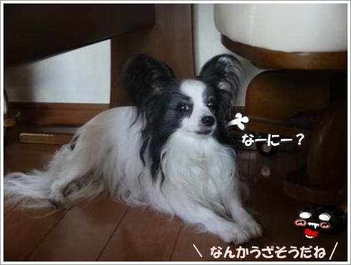 021_convert_20120913130309.jpg