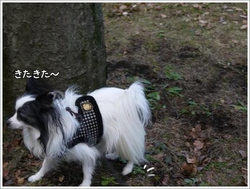 021_convert_20121213122223.jpg