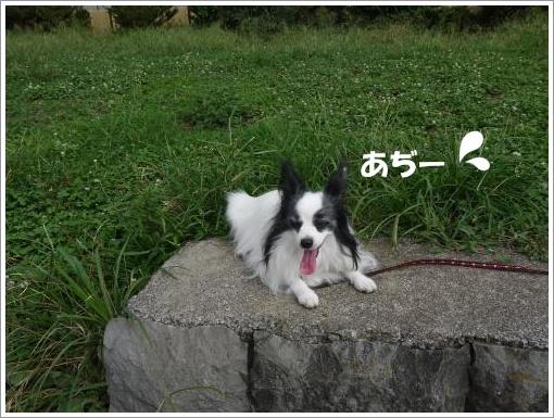 022_convert_20120918100507.jpg