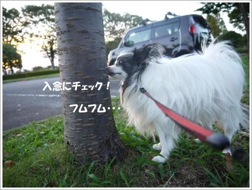 025_convert_20120910091807.jpg